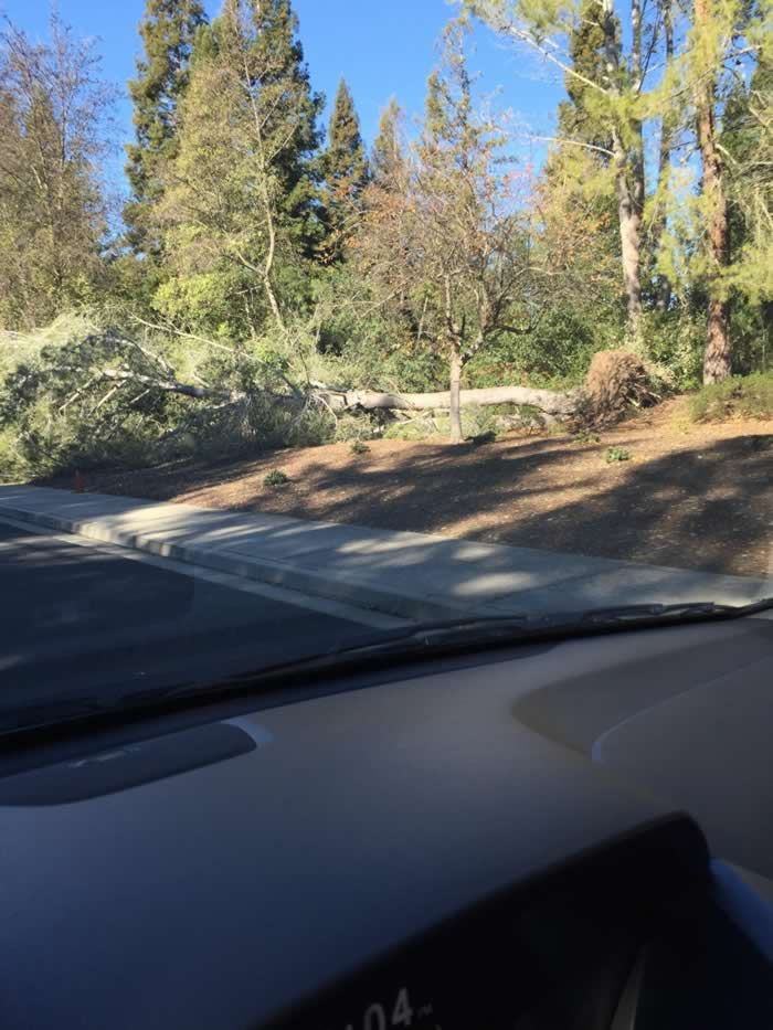 "<div class=""meta image-caption""><div class=""origin-logo origin-image ""><span></span></div><span class=""caption-text"">A downed tree is seen on Blackhawk Road near Mt. Diablo on Wednesday, Dec. 31, 2014. (Image sent via uReport)</span></div>"