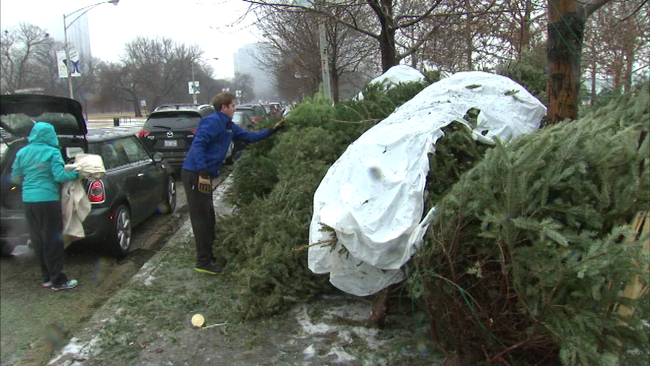 christmas tree recycling begins at 23 locations in chicago abc7chicagocom - Chicago Christmas Tree Recycling
