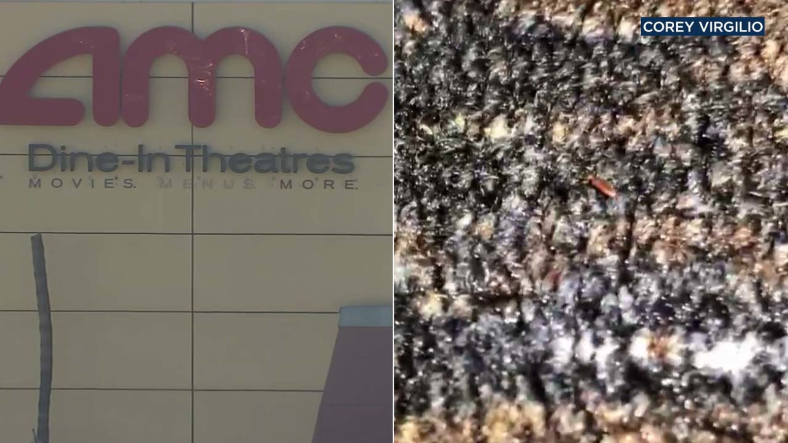 Video Tiny Bugs Crawl All Over Carpet At Amc Theatres In Southern California S Ontario Mills Mall Abc7 San Francisco