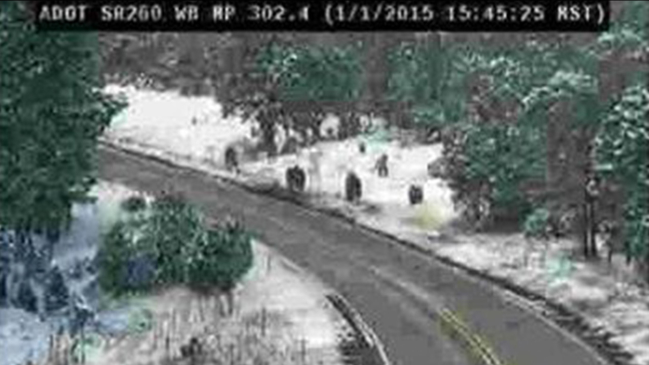 Sasquatch' family captured on Arizona Highway cameras spark