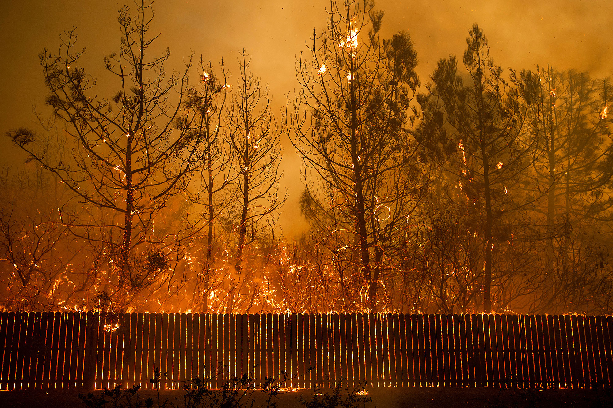 <div class='meta'><div class='origin-logo' data-origin='none'></div><span class='caption-text' data-credit='Noah Berger/AP Photo'>Flames climb trees as the Camp Fire tears through Paradise, Calif., on Thursday, Nov. 8, 2018.</span></div>