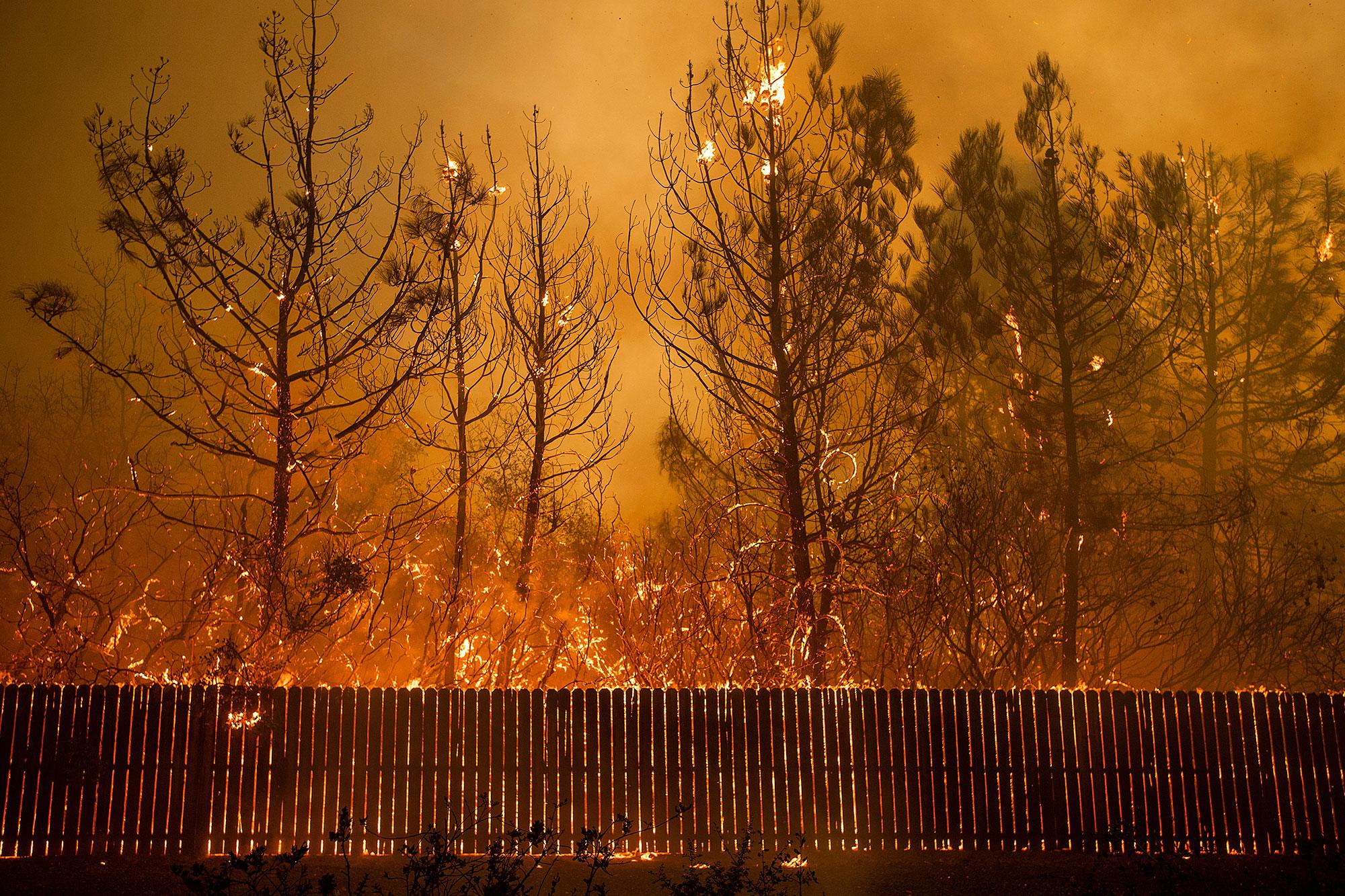 <div class='meta'><div class='origin-logo' data-origin='none'></div><span class='caption-text' data-credit='Noah Berger/AP Photo'>Flames climb trees as the Camp Fire tears through Paradise, Calif., on Thursday, Nov. 8, 2018.</span></div>