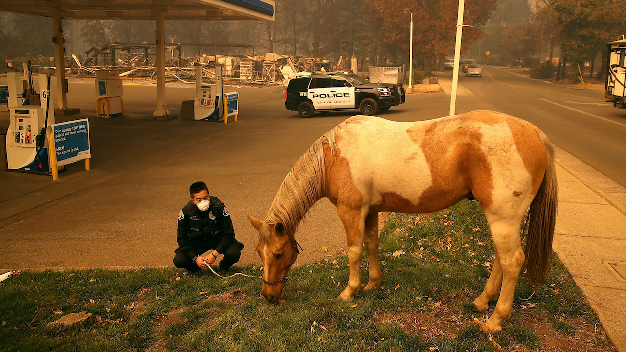 <div class='meta'><div class='origin-logo' data-origin='Creative Content'></div><span class='caption-text' data-credit='Justin Sullivan/Getty Images'>Rocklin police officer Randy Law tends to a horse that was found wandering after the Camp Fire moved through the area on November 9, 2018, in Paradise, California.</span></div>