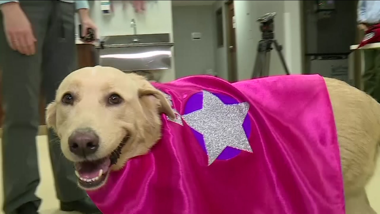 A Dog Named Star Was Suffering From Kidney Failure But Received A