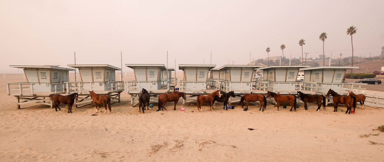 <div class='meta'><div class='origin-logo' data-origin='AP'></div><span class='caption-text' data-credit='AP Photo/Ringo H.W. Chiu'>Horses are tied to lifeguard booth on the beach in Malibu, Calif., Friday, Nov. 10, 2018.</span></div>