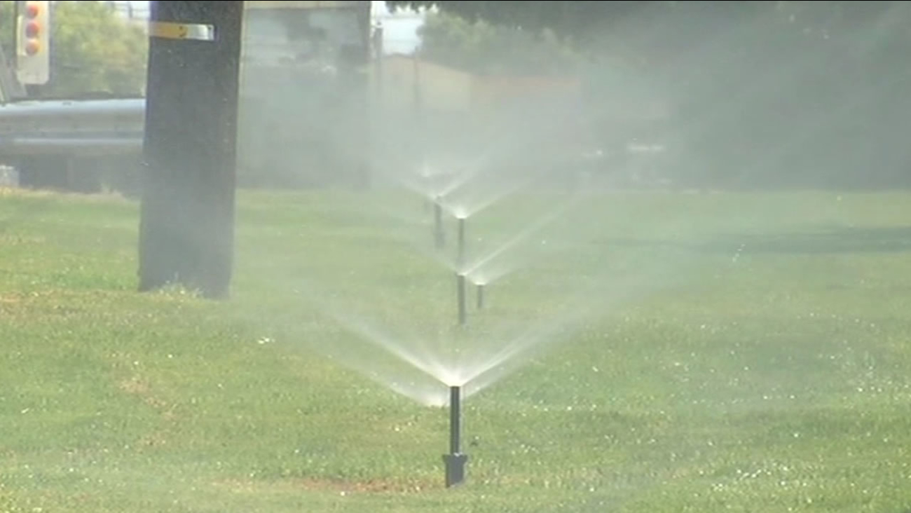 Sprinklers watering the grass