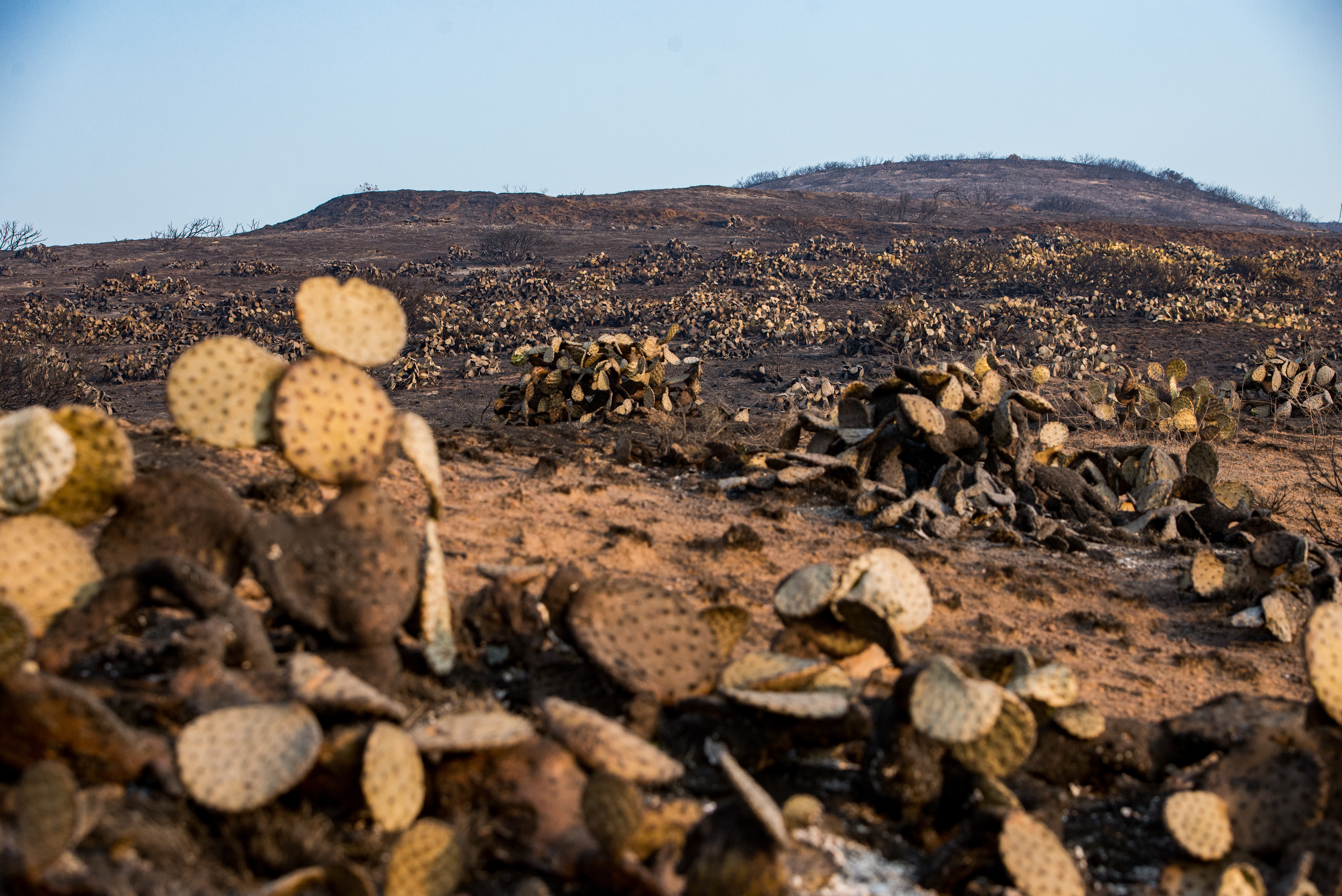 <div class='meta'><div class='origin-logo' data-origin='none'></div><span class='caption-text' data-credit='September Dawn Bottoms/SOPA Images/LightRocket via Getty Images'>Dead Cactus Field in Malibu after the Woolsey Fire swept through it.</span></div>