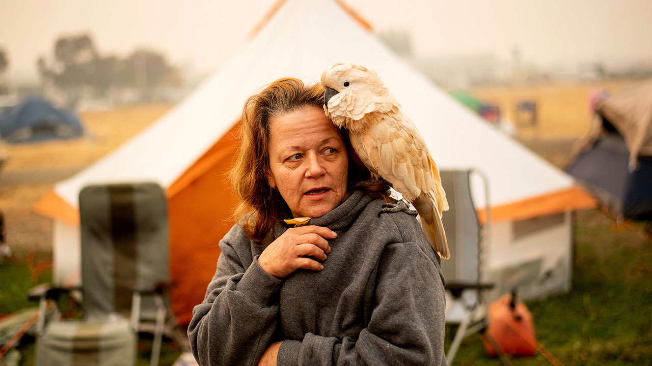 <div class='meta'><div class='origin-logo' data-origin='none'></div><span class='caption-text' data-credit='Noah Berger/AP Photo'>Suzanne Kaksonen, an evacuee of the Camp Fire, and her cockatoo Buddy camp at a makeshift shelter outside a Walmart store in Chico, Calif., on Wednesday, Nov. 14, 2018.</span></div>