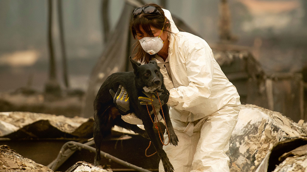 <div class='meta'><div class='origin-logo' data-origin='none'></div><span class='caption-text' data-credit='Noah Berger/AP Photo'>A search and rescue worker, looking for Camp Fire victims, carries Susie Q. to safety after the cadaver dog fell through rubble at the Holly Hills Mobile Estates on Wednesday,.</span></div>