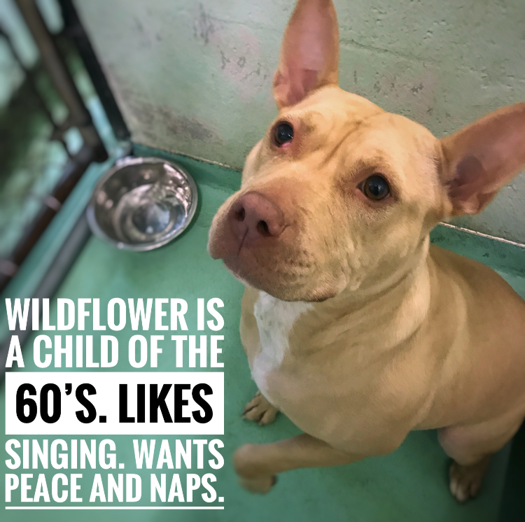 """<div class=""""meta image-caption""""><div class=""""origin-logo origin-image wtvd""""><span>WTVD</span></div><span class=""""caption-text"""">These cuties are up for adoption at APS of Durham. (Julie Wilson)</span></div>"""
