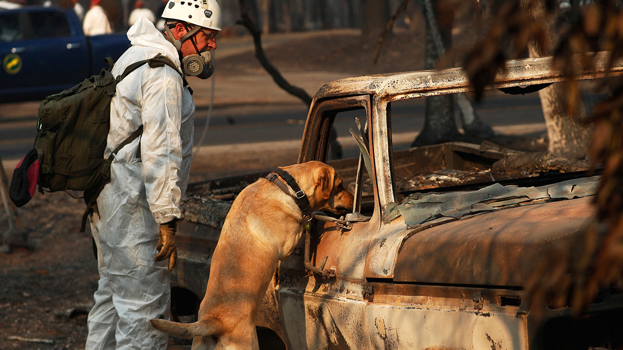 <div class='meta'><div class='origin-logo' data-origin='none'></div><span class='caption-text' data-credit='John Locher/AP Photo'>In this Friday, Nov. 16, 2018 photo, a recovery dog searches for human remains in Paradise, Calif.</span></div>