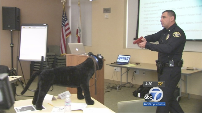 hawthorne police taught how to deal with dogs