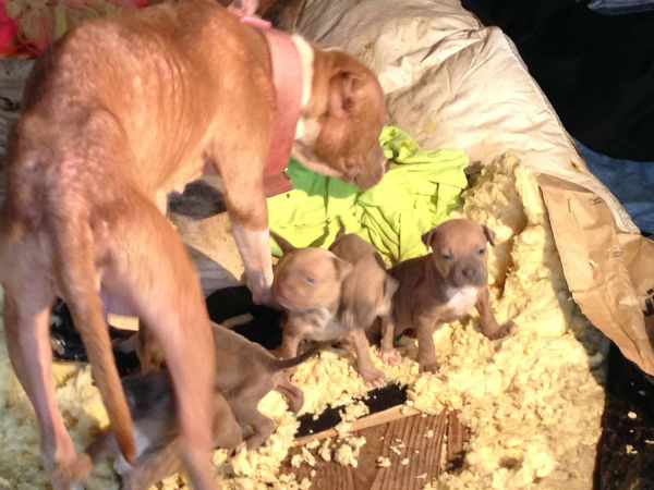 """<div class=""""meta image-caption""""><div class=""""origin-logo origin-image """"><span></span></div><span class=""""caption-text"""">An elderly tenant says puppies left on his property could go hungry because he can't afford to feed them.</span></div>"""