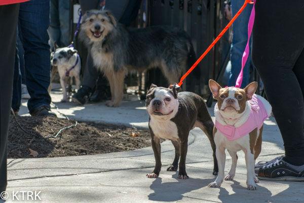 "<div class=""meta image-caption""><div class=""origin-logo origin-image ""><span></span></div><span class=""caption-text"">Houston area residents have a brand new dog park to take their furry friends (KTRK Photo/ David Mackey)</span></div>"