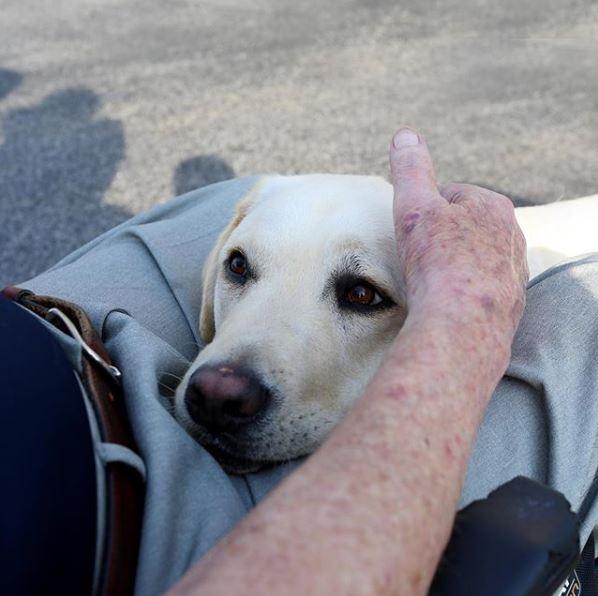 Service Dog Sully H W Bush Escorted Into The Capitol