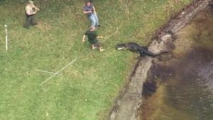 Alligator Abc13 Com Abc13 Com