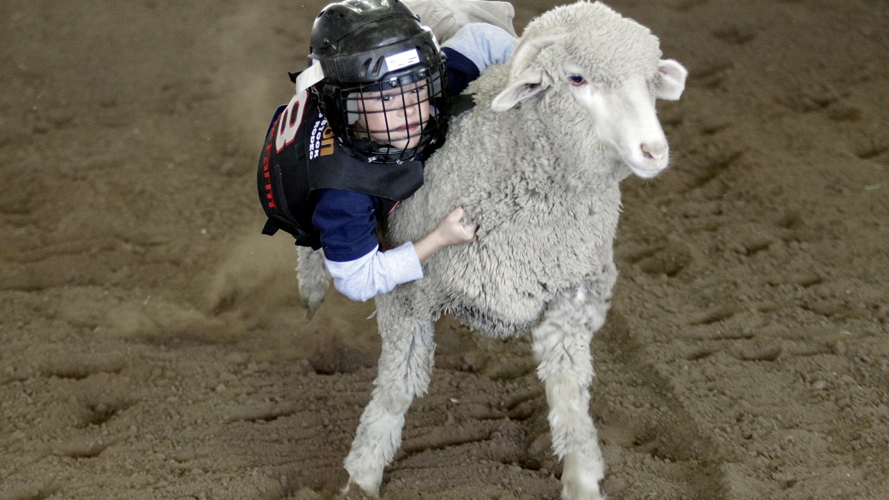 In this photo, Grayden Dewitt, 6, rides a sheep during a Mutton Bustin' contest at the Houston Livestock Show and Rodeo.