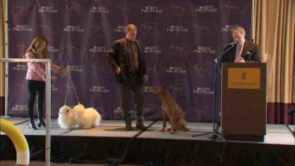 """<div class=""""meta image-caption""""><div class=""""origin-logo origin-image """"><span></span></div><span class=""""caption-text"""">Two new breeds will be featured in this year's Westminster Dog Show.</span></div>"""