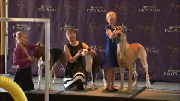 """<div class=""""meta image-caption""""><div class=""""origin-logo origin-image """"><span></span></div><span class=""""caption-text"""">The Rogers sisters will be special exhibitors, entering with different breeds: an American foxhound, a Whippet, and a Great Dane.</span></div>"""