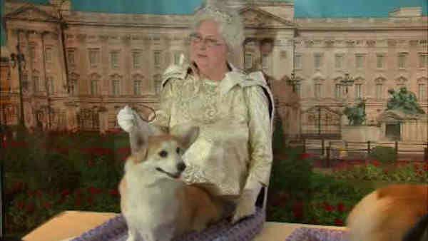 "<div class=""meta image-caption""><div class=""origin-logo origin-image ""><span></span></div><span class=""caption-text"">A 'Queen Elizabeth' themed demonstration will feature Pembroke Welsh Corgis.</span></div>"