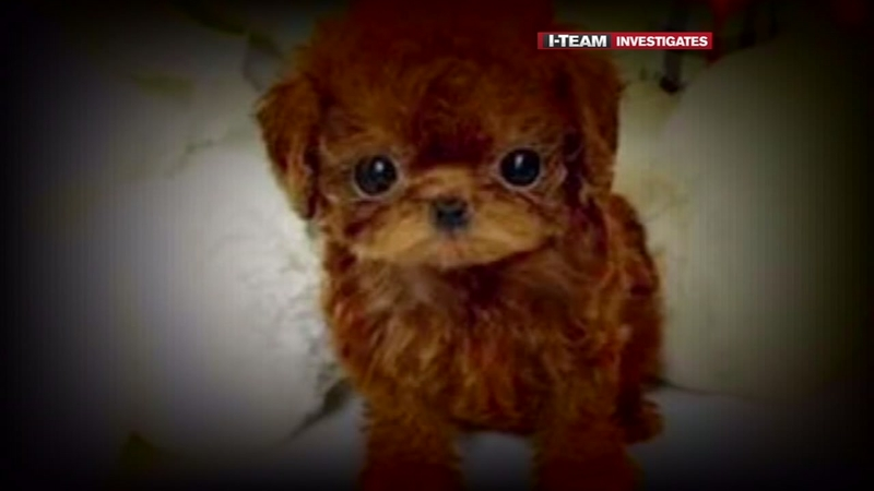 I-Team: Man out $500 trying to buy puppy online