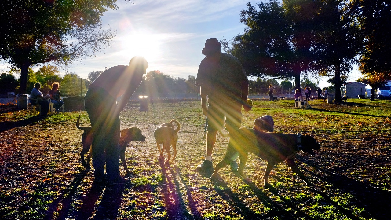 Visitors and their dogs enjoy a sunny afternoon at the dog park.