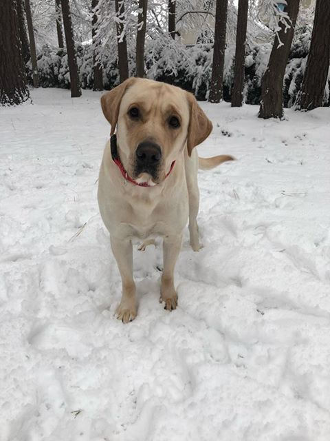<div class='meta'><div class='origin-logo' data-origin='none'></div><span class='caption-text' data-credit='Dawn Cuthrell'>Flash enjoying snow in Rocky Mount</span></div>