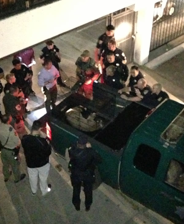 """<div class=""""meta image-caption""""><div class=""""origin-logo origin-image """"><span></span></div><span class=""""caption-text"""">Mountain View is still buzzing after a cougar caused a standoff and evacuations at an apartment complex (Mountain View Police)</span></div>"""