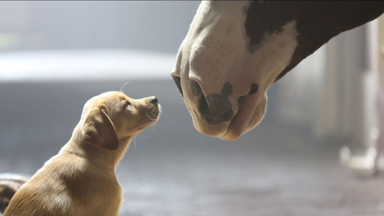 More than just a game: 12 of the best Super Bowl commercials