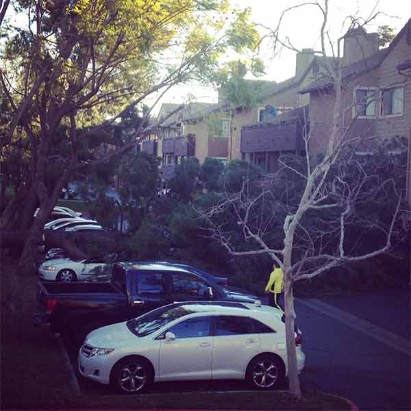"<div class=""meta image-caption""><div class=""origin-logo origin-image ""><span></span></div><span class=""caption-text"">ABC7 viewer Debi Sardina shared this photo of a tree down in Alta Loma on Saturday, Jan. 24, 2015. (twitter.com/debisardina)</span></div>"