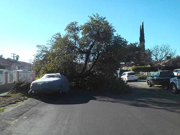 "<div class=""meta image-caption""><div class=""origin-logo origin-image ""><span></span></div><span class=""caption-text"">ABC7 viewer Joseph Omar Ortiz shared this photo of a tree that fell on top of a car at Victory Boulevard and Radford Avenue in North Hollywood on Saturday, Jan. 24, 2015. (ABC7 viewer Joseph Omar Ortiz)</span></div>"