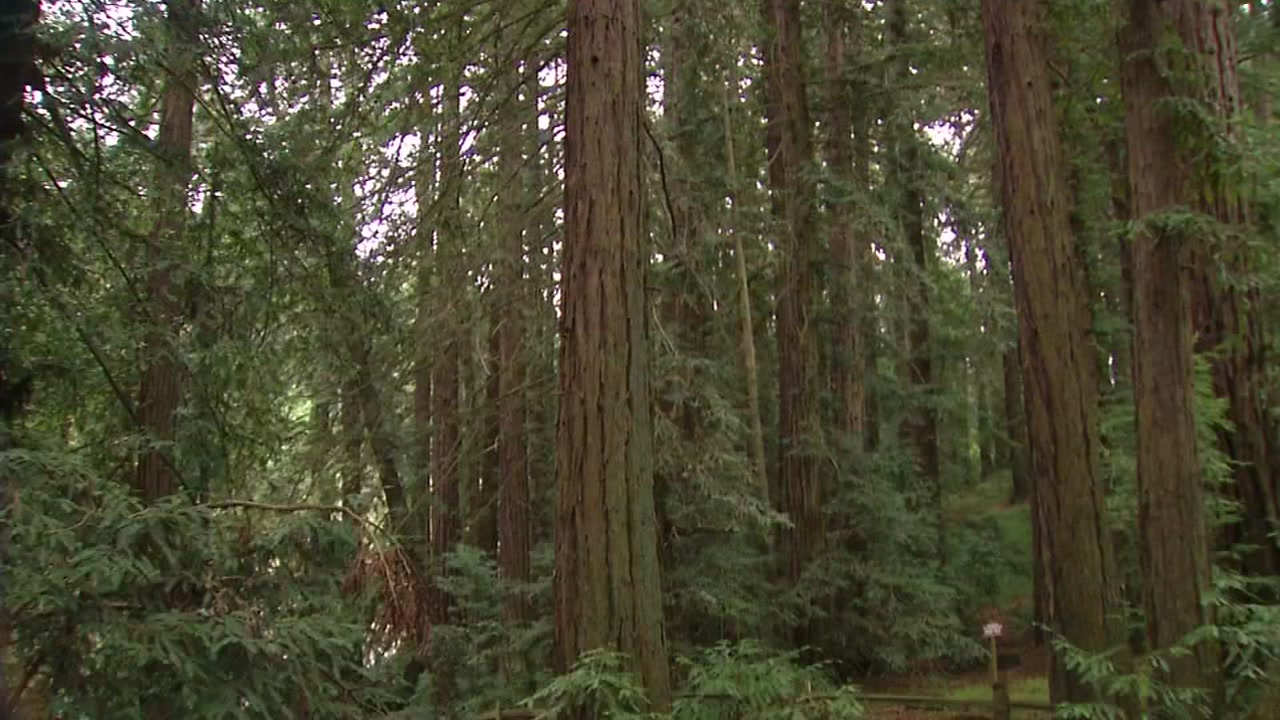 Exhibit honoring legacy of old-growth redwood forests unveiled in Oakland