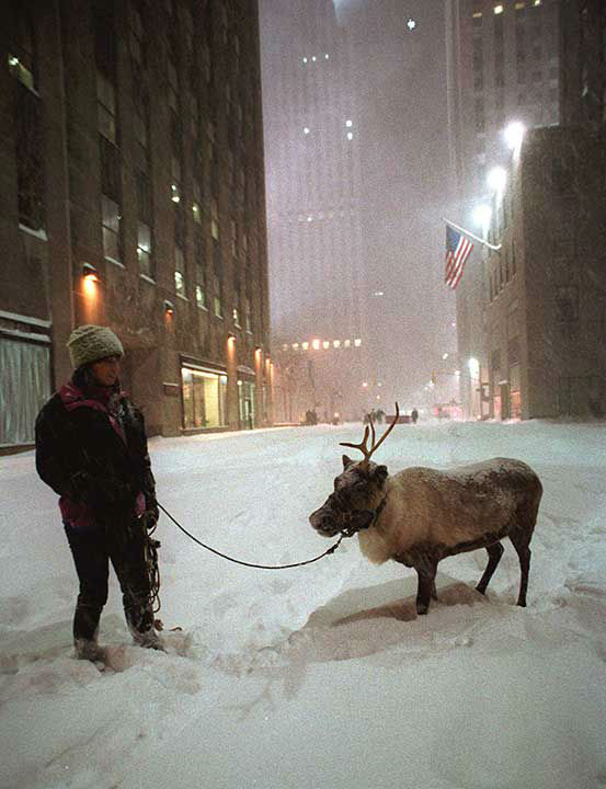 """<div class=""""meta image-caption""""><div class=""""origin-logo origin-image none""""><span>none</span></div><span class=""""caption-text"""">Jan. 1996: A reindeer performing at Radio City Music Hall is led outside to the streets of New York City during a blizzard. (Photo/WALLY SANTANA)</span></div>"""