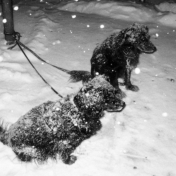 """<div class=""""meta image-caption""""><div class=""""origin-logo origin-image none""""><span>none</span></div><span class=""""caption-text"""">Go homeee!!!! #newyork #newyorkcity #snowinthecity #abc7ny #manhattan #dogs #junostorm #wintercoldnyc (lunamau2/Instagram)</span></div>"""