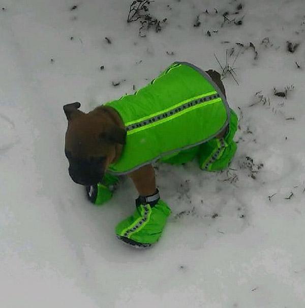 "<div class=""meta image-caption""><div class=""origin-logo origin-image none""><span>none</span></div><span class=""caption-text"">My first snow day #oldenglishbulldog (duke_oldenglishbulldog/Instagram)</span></div>"