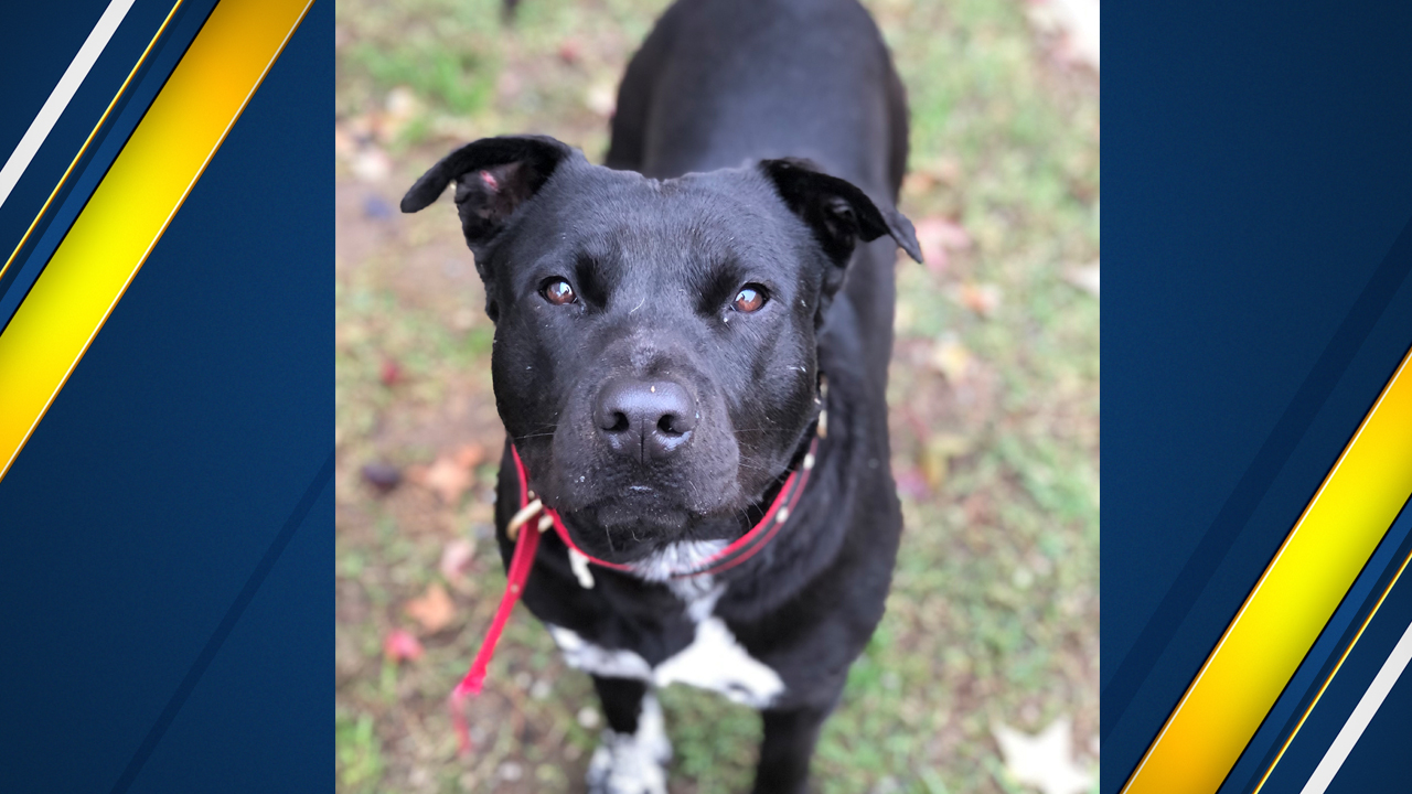 "<div class=""meta image-caption""><div class=""origin-logo origin-image none""><span>none</span></div><span class=""caption-text"">Rex is a 2 year old mix breed boy looking for a family to snuggle up to this Christmas!</span></div>"