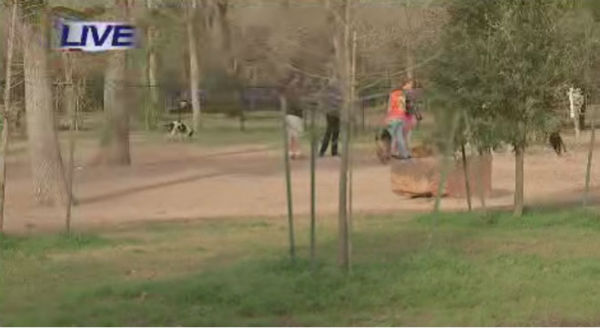 "<div class=""meta image-caption""><div class=""origin-logo origin-image none""><span>none</span></div><span class=""caption-text"">Two-year-old Diesel, a Staffordshire bull terrier, was shot and killed January at a dog park</span></div>"