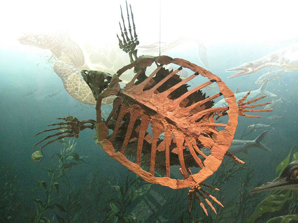 """<div class=""""meta image-caption""""><div class=""""origin-logo origin-image none""""><span>none</span></div><span class=""""caption-text"""">Protestga is an extinct genus of marine turtle from the late Cretaceous period.</span></div>"""