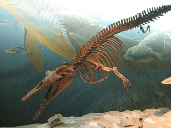 """<div class=""""meta image-caption""""><div class=""""origin-logo origin-image none""""><span>none</span></div><span class=""""caption-text"""">Zygorhiza is an extinct genus of early whale from the Late Eocene Period, whose body was similar to modern cetaceans</span></div>"""