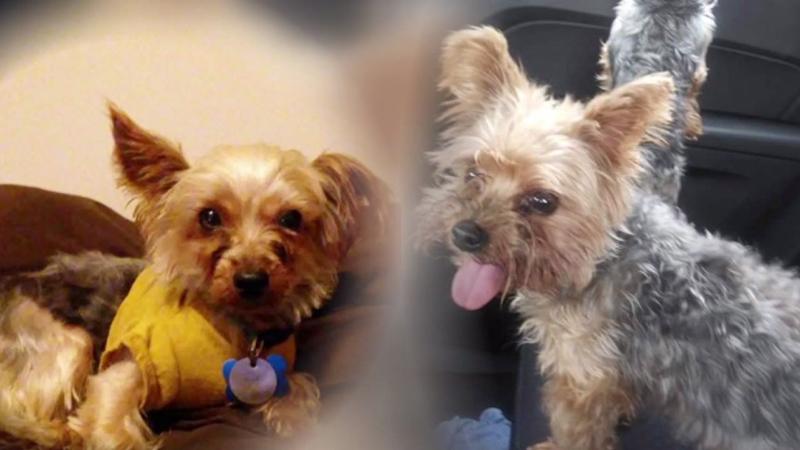 2 Stolen Service Dogs Found Safe By Durham Police Abc11com