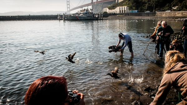 "<div class=""meta image-caption""><div class=""origin-logo origin-image kgo""><span>KGO</span></div><span class=""caption-text"">The first 24 seabirds were released back to freedom on Wednesday, Jan. 28, 2015 in Sausalito. Goo remains unknown. (@WayneFreeman)</span></div>"