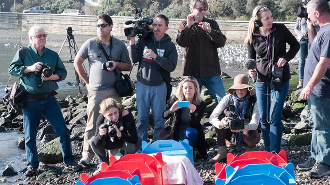 "<div class=""meta image-caption""><div class=""origin-logo origin-image kgo""><span>KGO</span></div><span class=""caption-text"">Members of the media were on hand to watch the release of the seabirds on Wednesday, Jan. 28, 2015. (@WayneFreeman)</span></div>"