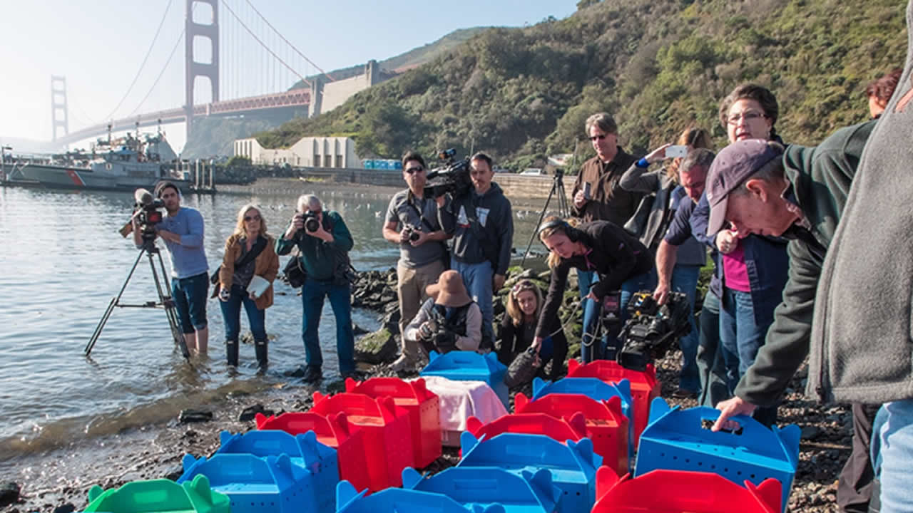 "<div class=""meta image-caption""><div class=""origin-logo origin-image kgo""><span>KGO</span></div><span class=""caption-text"">Media crews minutes before the release of the seabirds on Wednesday, Jan. 28, 2015. (@WayneFreeman)</span></div>"