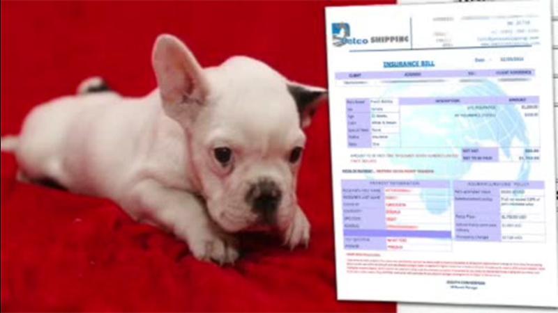 VIDEO: Buyer Beware: Online puppy sales scam