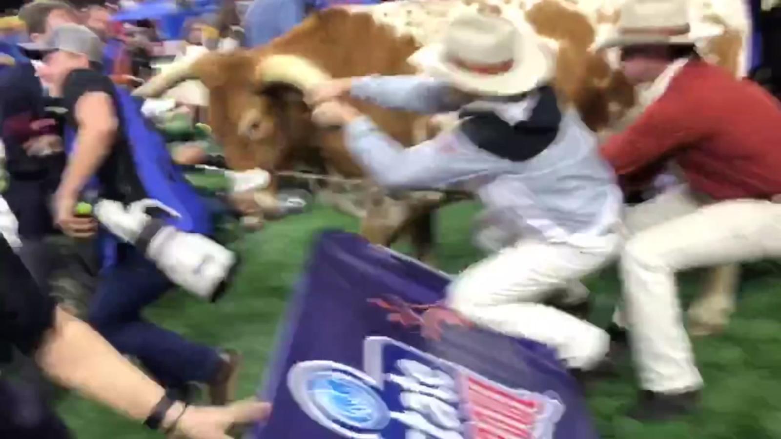 89030b8eb18 Texas Longhorns  mascot Bevo charges at Georgia Bulldogs  mascot Uga ...