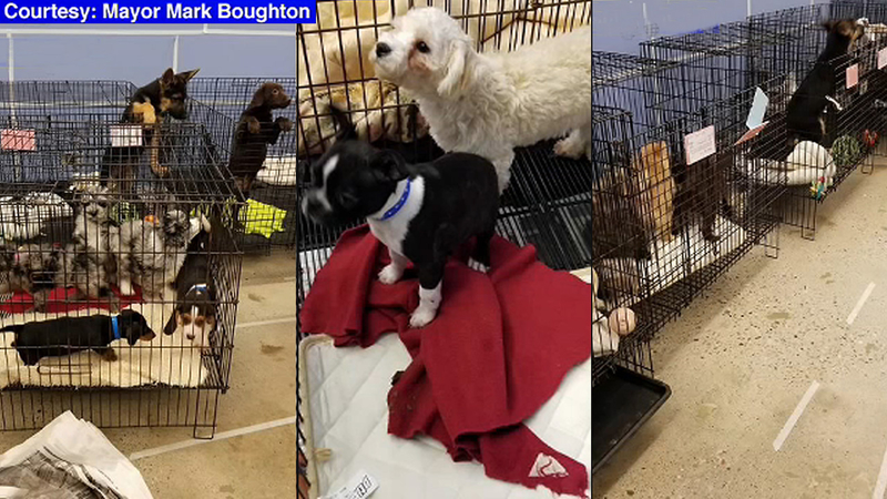 Rescuers Use Human Chain To Save Nearly 100 Puppies From Danbury Pet