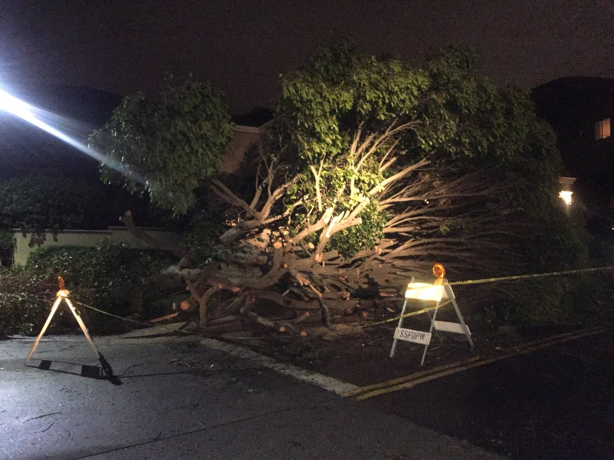 <div class='meta'><div class='origin-logo' data-origin='none'></div><span class='caption-text' data-credit=''>Stormy conditions caused a tree to fall in South San Francisco on Sunday, January 6, 2019.</span></div>