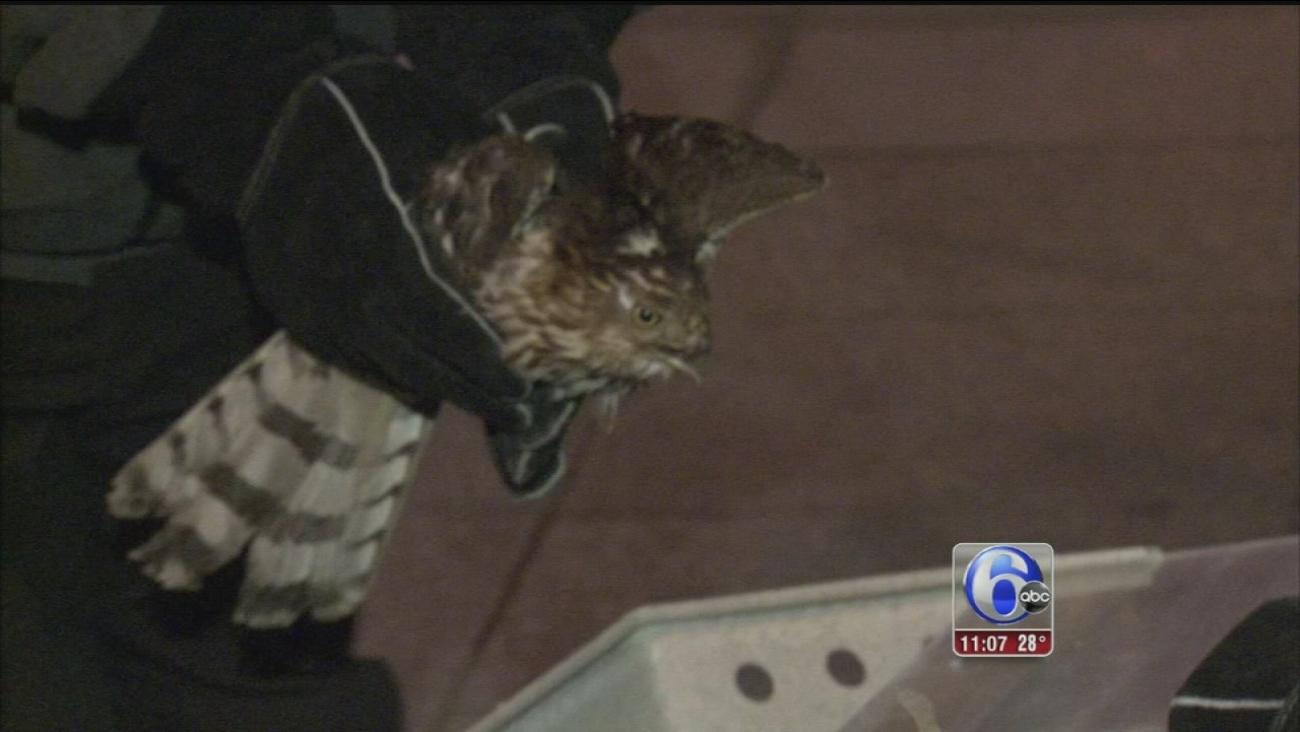 VIDEO: Injured bird