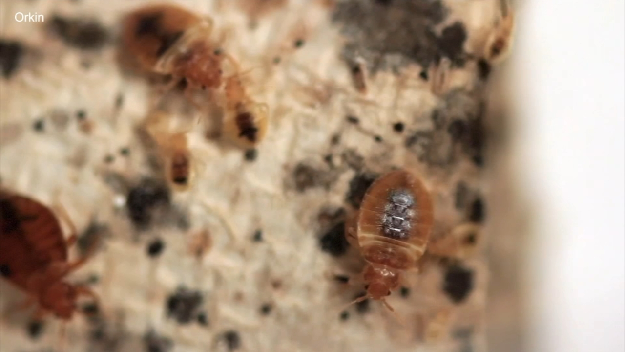 Chicago Ranks No 3 On Orkin S List Of Bed Bug Cities Abc7 Chicago
