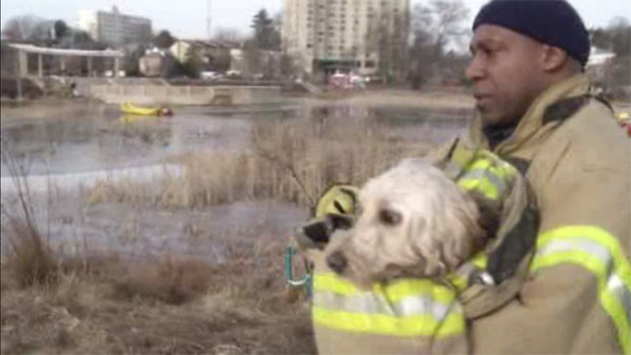 Dog rescued after falling through icy pond in Wilmington